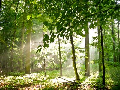 Frische Luft in der Natur geniessen