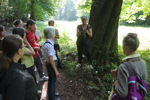 Wildkräuter Wanderung in Wiesbaden
