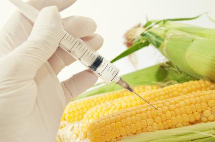 GMO Nutzpflanzen